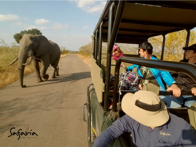 Open Vehicle Safari in the Kruger National Park