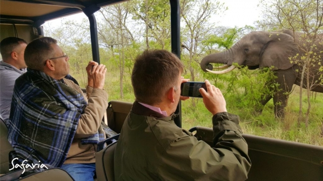 Up close and personal with the Big 5 with Open Vehicle Safari