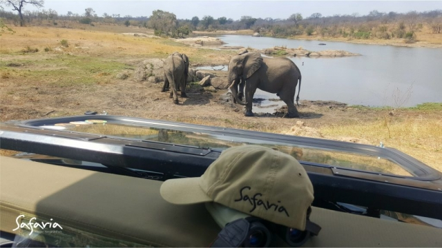 Open Safari Vehicle drive watching the Big 5 at the water hole in Kruger Park