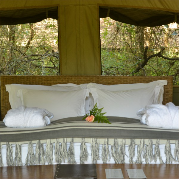 Safaria Safaria 3 Day Luxury Kruger Park Safari Package