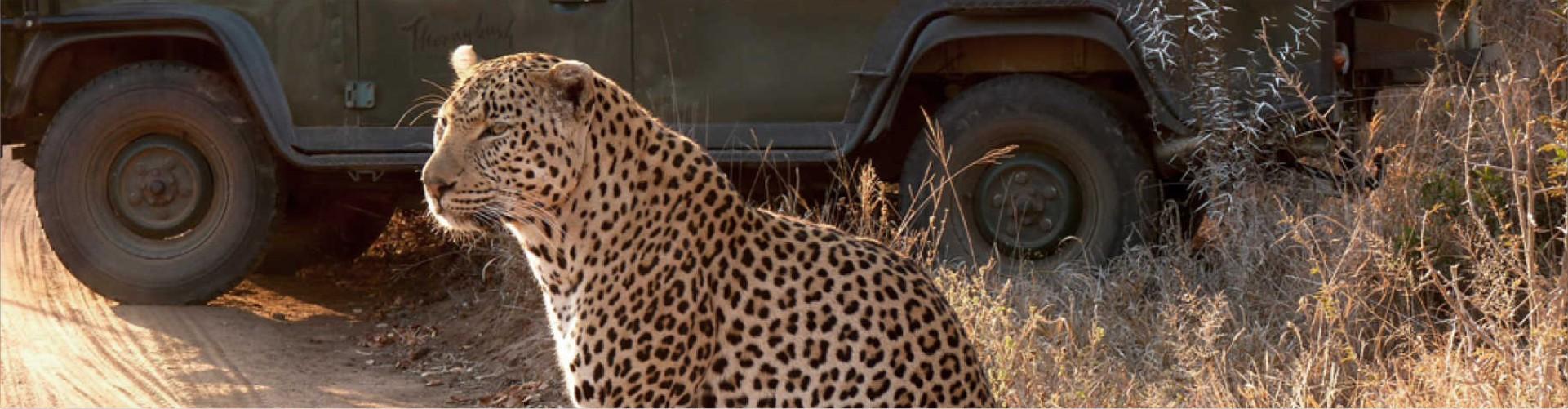 Safaria – Web new thornybush 3