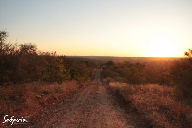 Safaria Kruger National Park Landscape