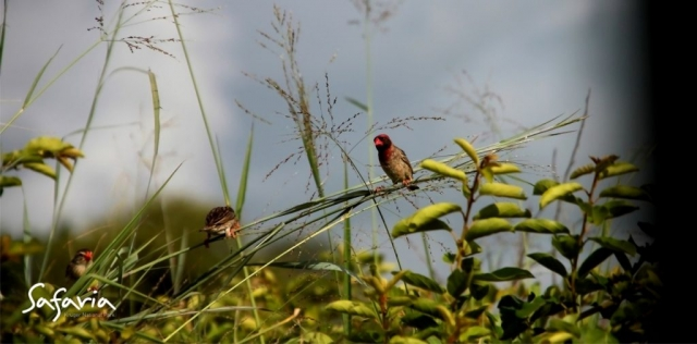 Birds in the Kruger National Park, Safaria Guides
