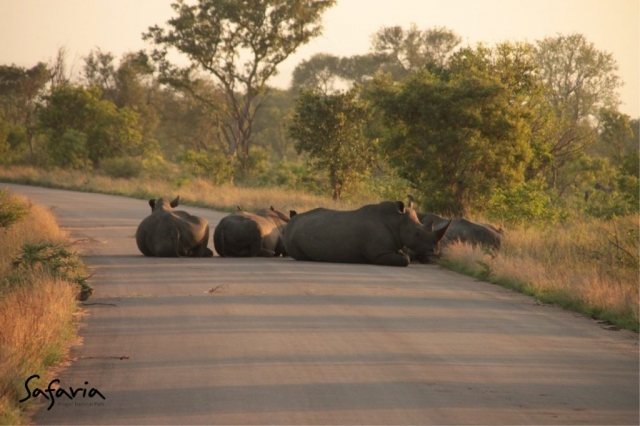 Big 5 in the Kruger National Park Road, Safaria