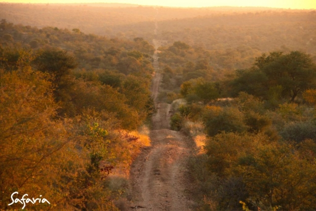 Kruger Park gravel road with experienced Safaria guides
