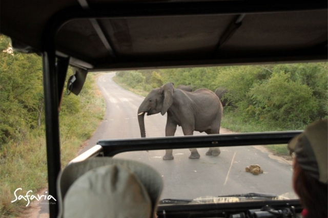 Open Vehicle with Safaria Private Guide in Kruger National Park