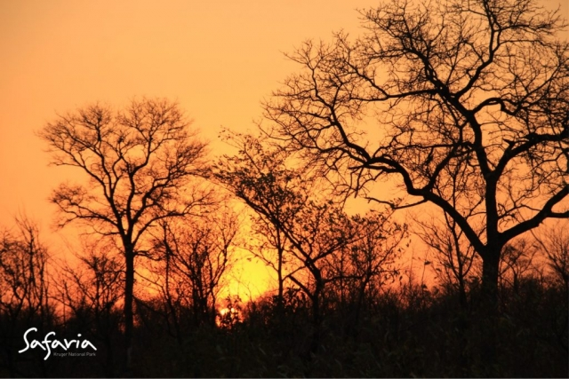 Sun rising over the Kruger National Park landscape