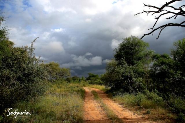 Safaria Kruger National Park Landscape