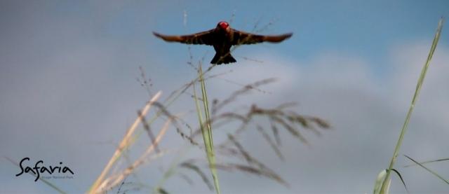 Safaria Birds in the Kruger National Park