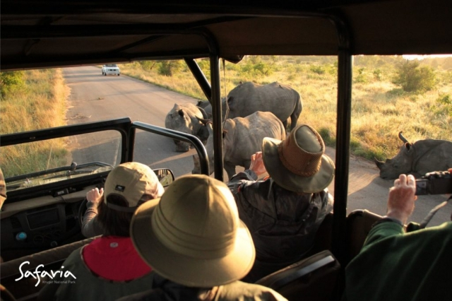 Open Vehicle Safari with Private Safaria Guide looking at Rhinos