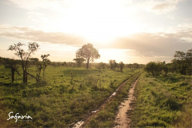 Beautiful landscape taking by Safaria in the Kruger National Park