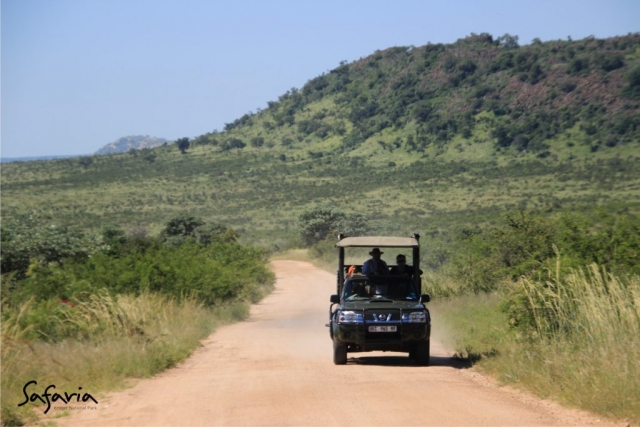 Safaria Open Vehicle drive in the Kruger National Park
