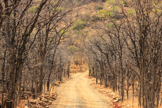 Kruger National Park gravel road with canopy of trees