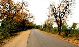 Kruger National Park road with landscape