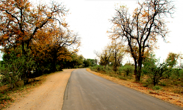 Kruger National Park road with landscape