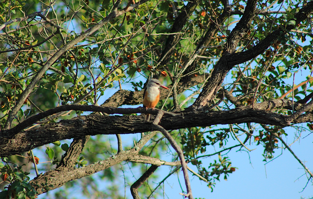 Safaria Kruger National Park Birding Safari