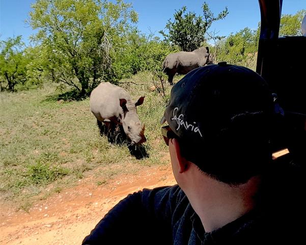Safaria Rhino up close