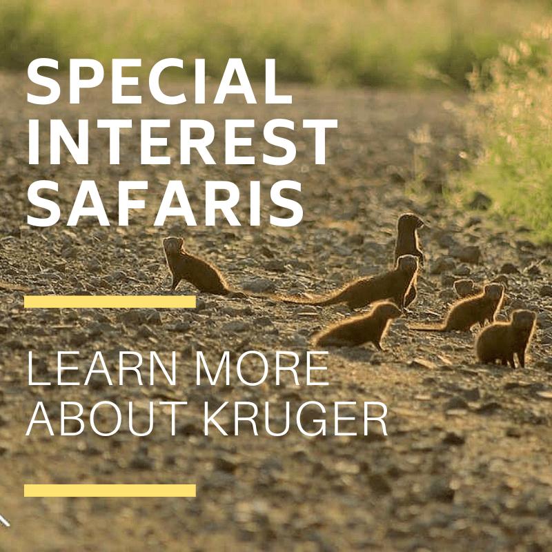 Special interest safaris in kruger