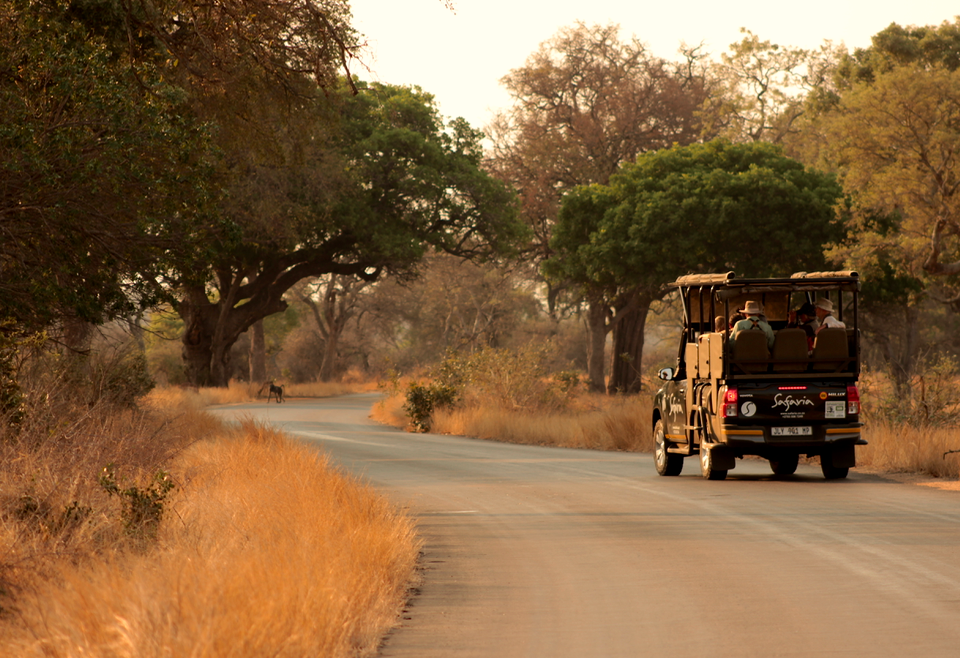 Safaria Kruger Park Safaris for the Naturalist