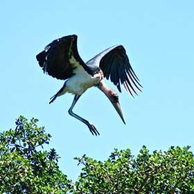 Overnight Kruger Park Safaris Bird