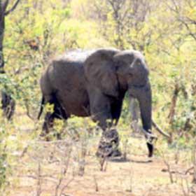 Overnight Kruger Park Safaris Elephant