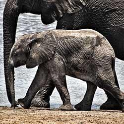 Overnight Kruger Park Safaris