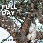 Kruger Park Birding Safaris