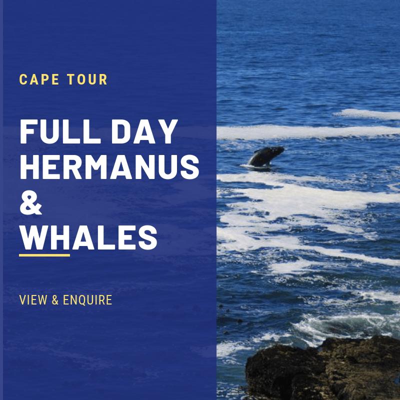 CAPE HERMANUS TOURS