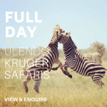 Kruger park full day safari