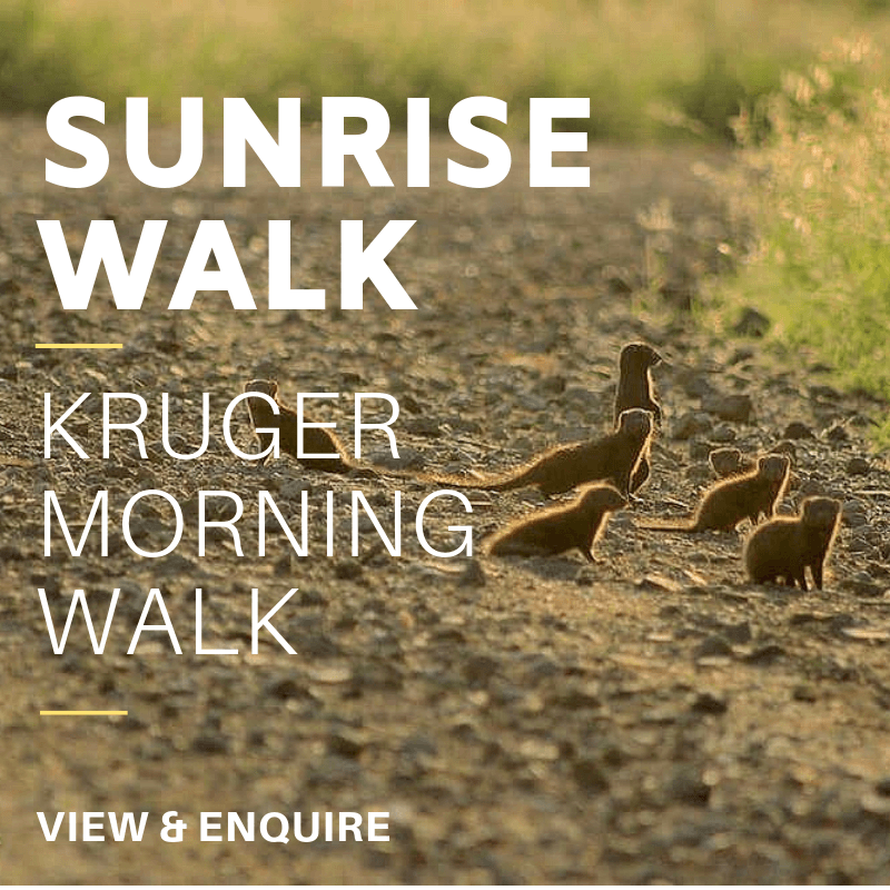 1 Sunrise KNP Walk