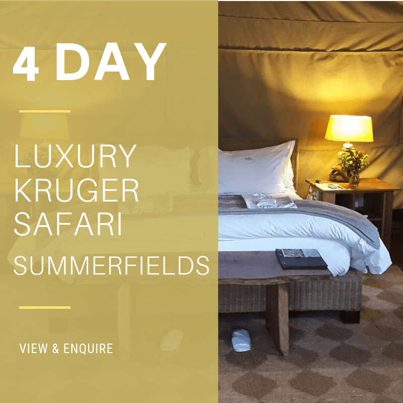 4 Day Lux KNP_SF