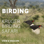 Birding KNP