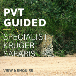 PVT Guided KNP