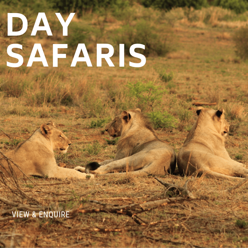 Day Safaris