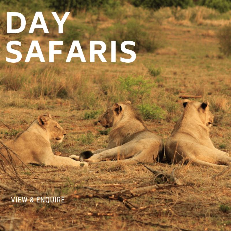Day Safaris