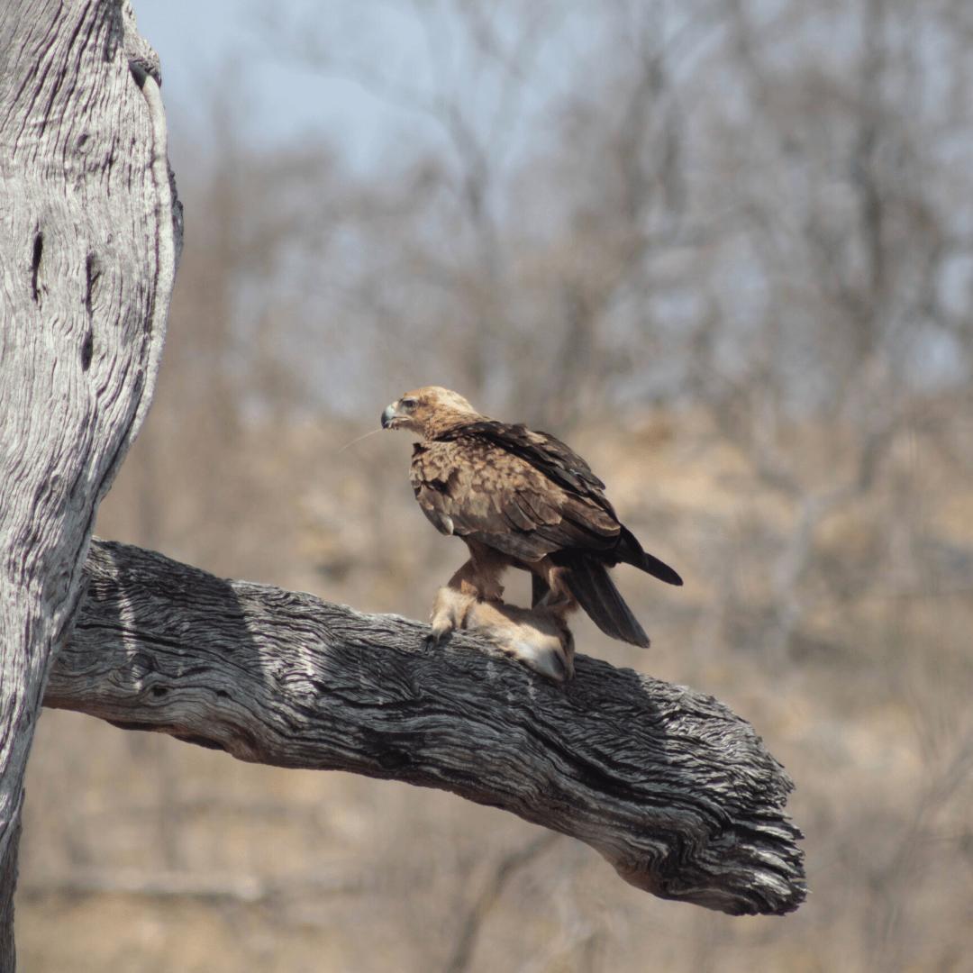 Birding Safari 2