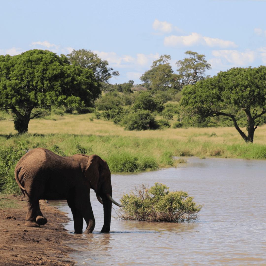 Kruger parks Elephants