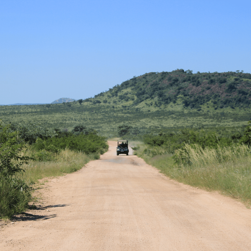Day safari in Kruger Park