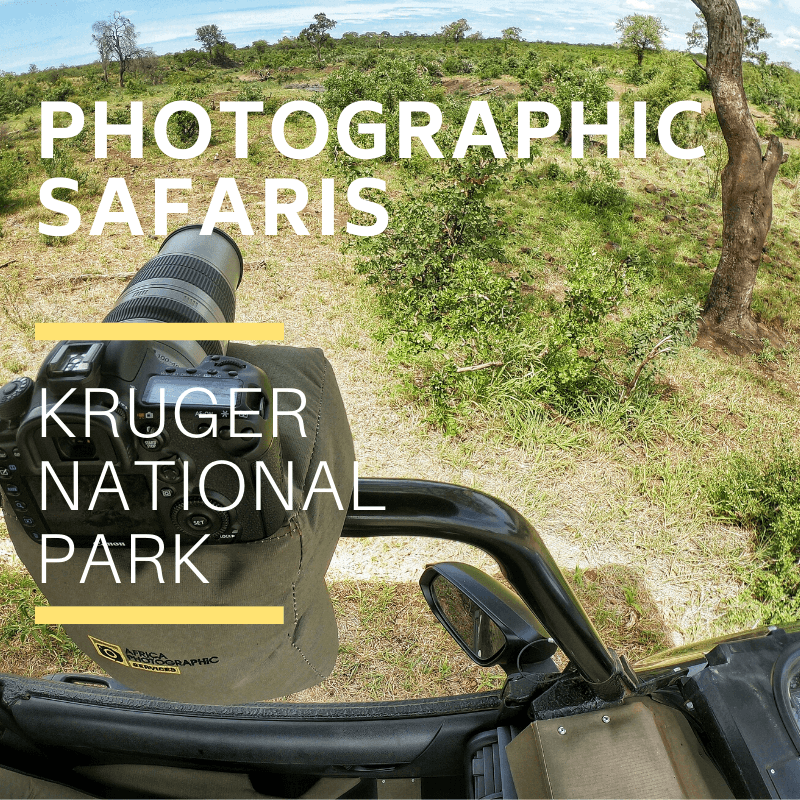 Kruger Park Photographic Safaris