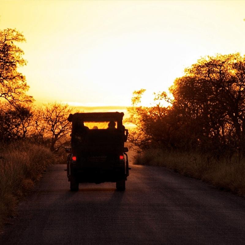 Sunrise Safari Kruger park