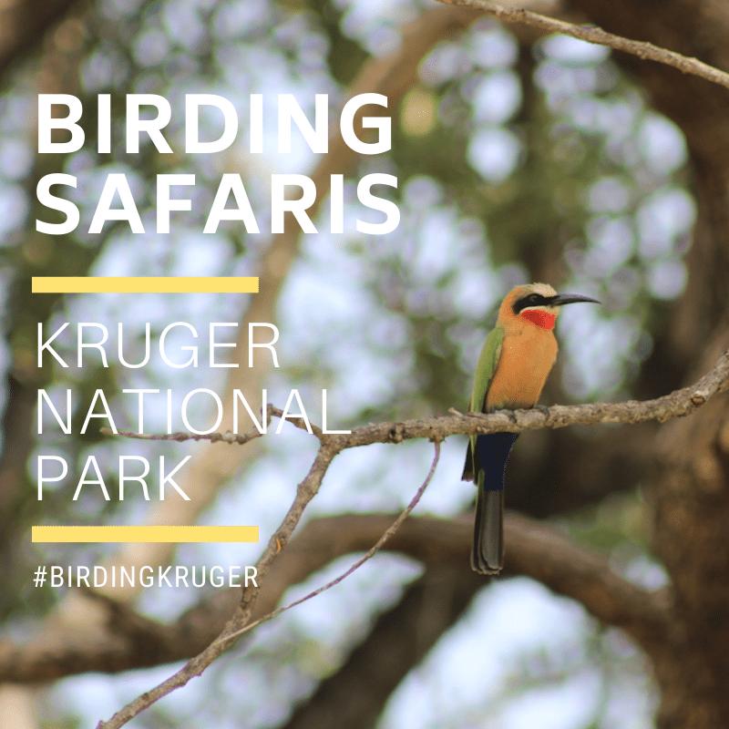 Kruger Birding Safaris 3
