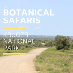 Botanical Safari Kruger Park