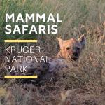 Kruger Park Mammal Safaris
