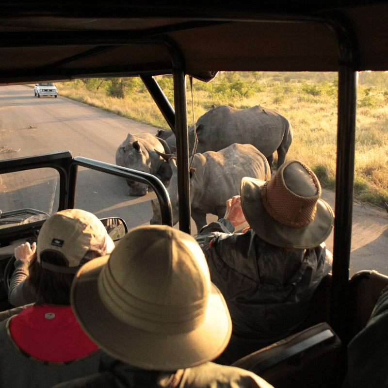 20.Full open safari vehicles