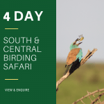 4 Day Birding Safari