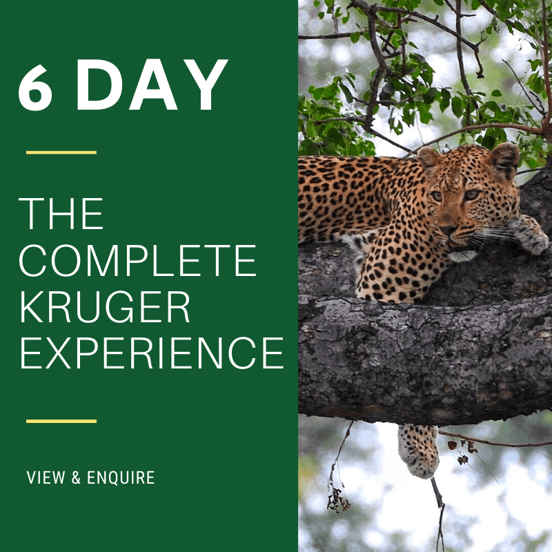 6 Day Complete Kruger Safari