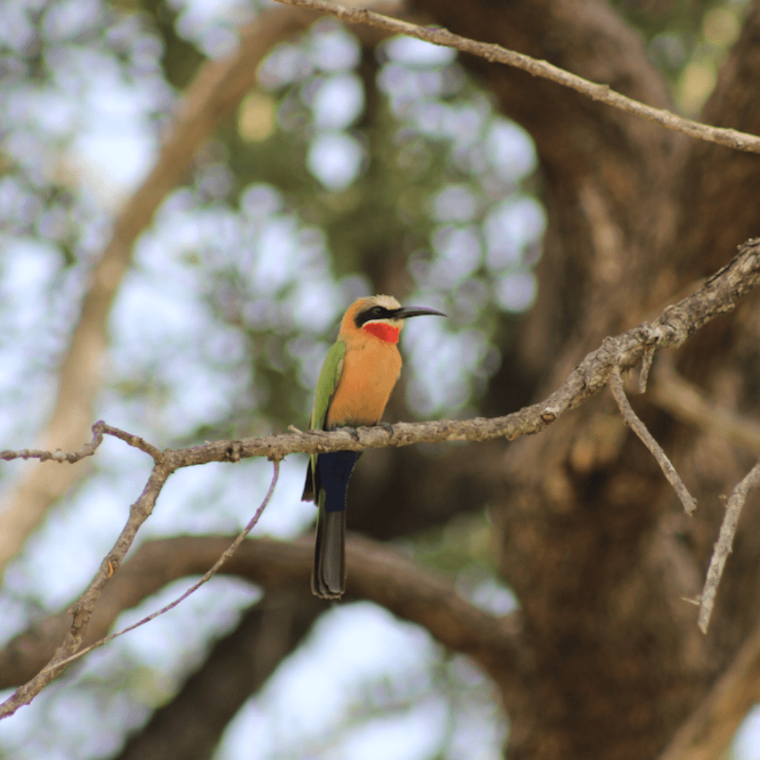 Birding Safari 3