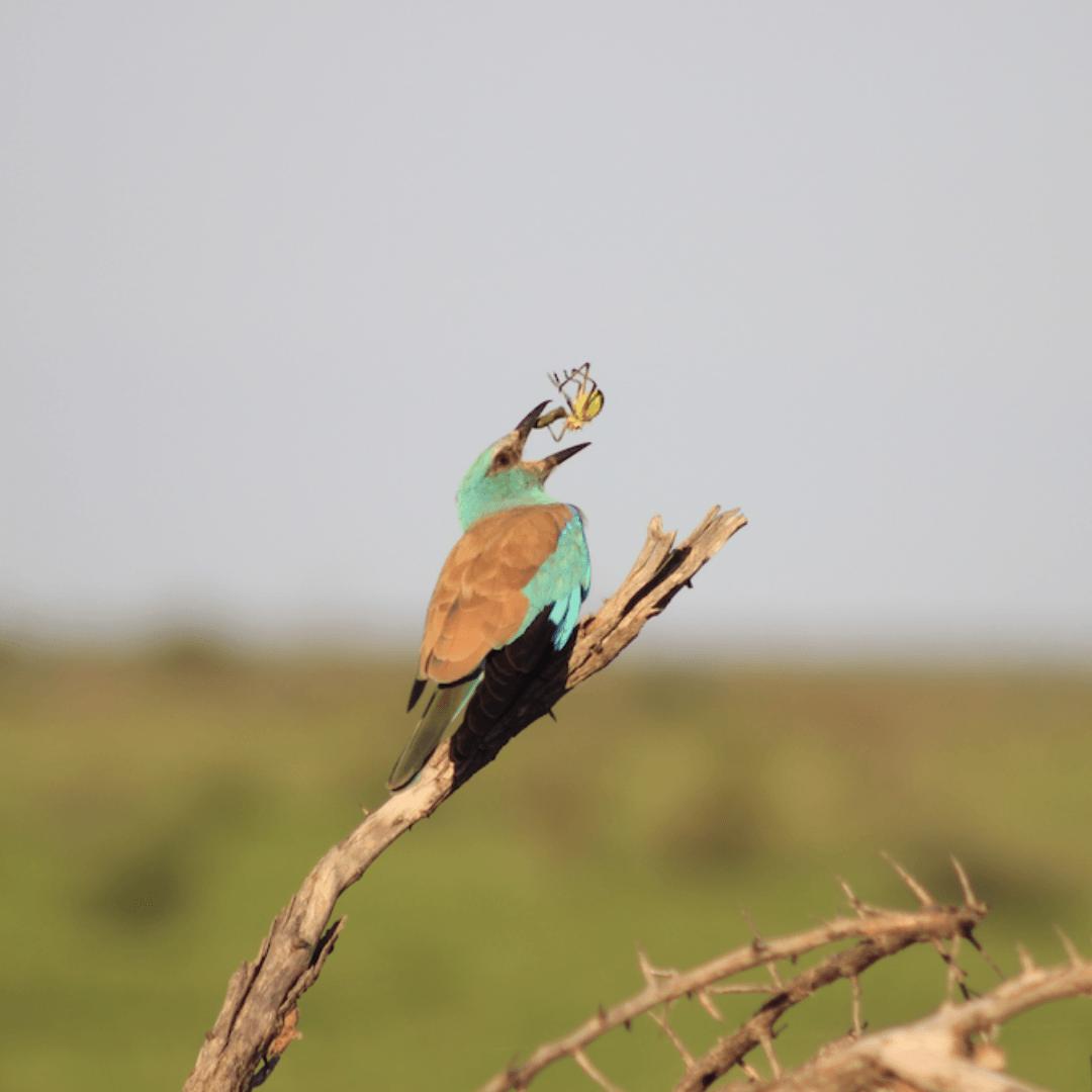 Birding Safari 4