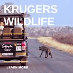 Krugers Wildlife