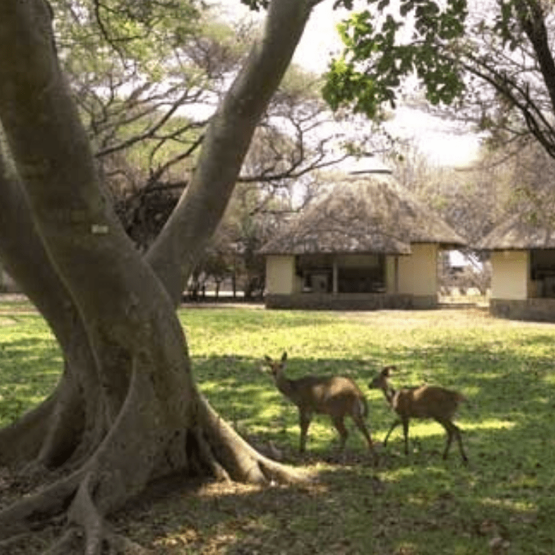 Letaba Camp surrounds